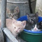 Kittens in bowl