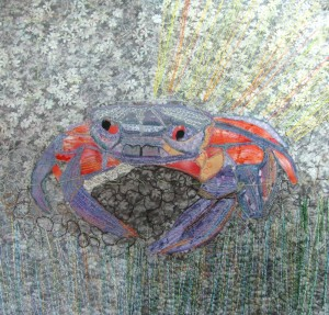 Crab without rocks5