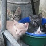 Kittens in bowl